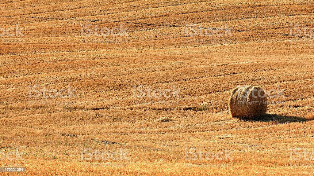 Hay bale alone on a field royalty-free stock photo