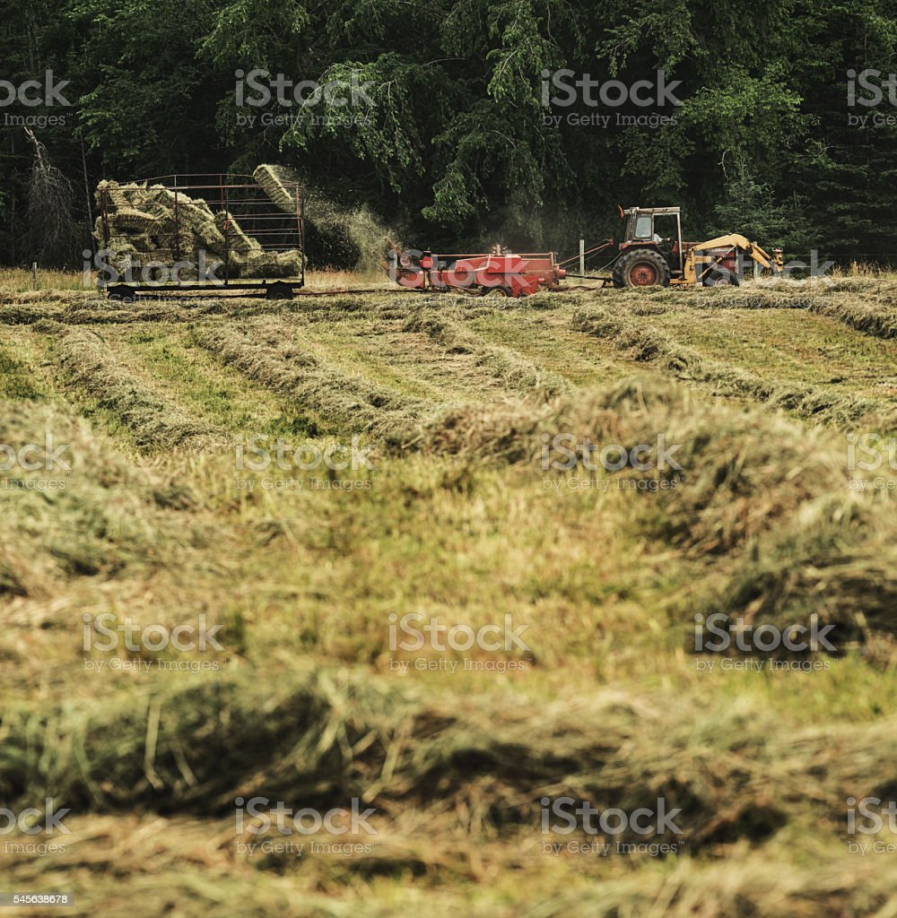 Hay Bale Collection stock photo