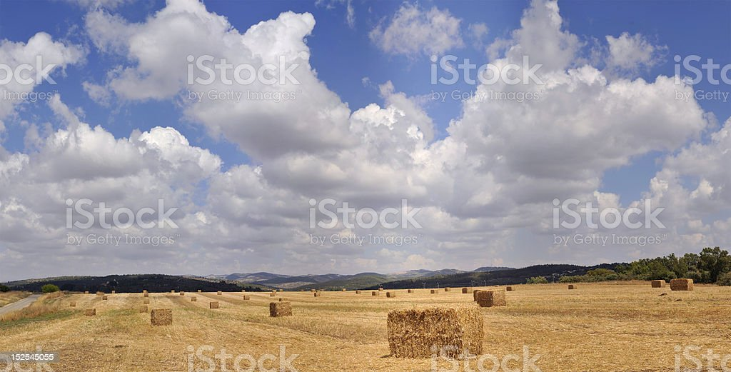 Hay bale in a golden dry field, Israel. royalty-free stock photo
