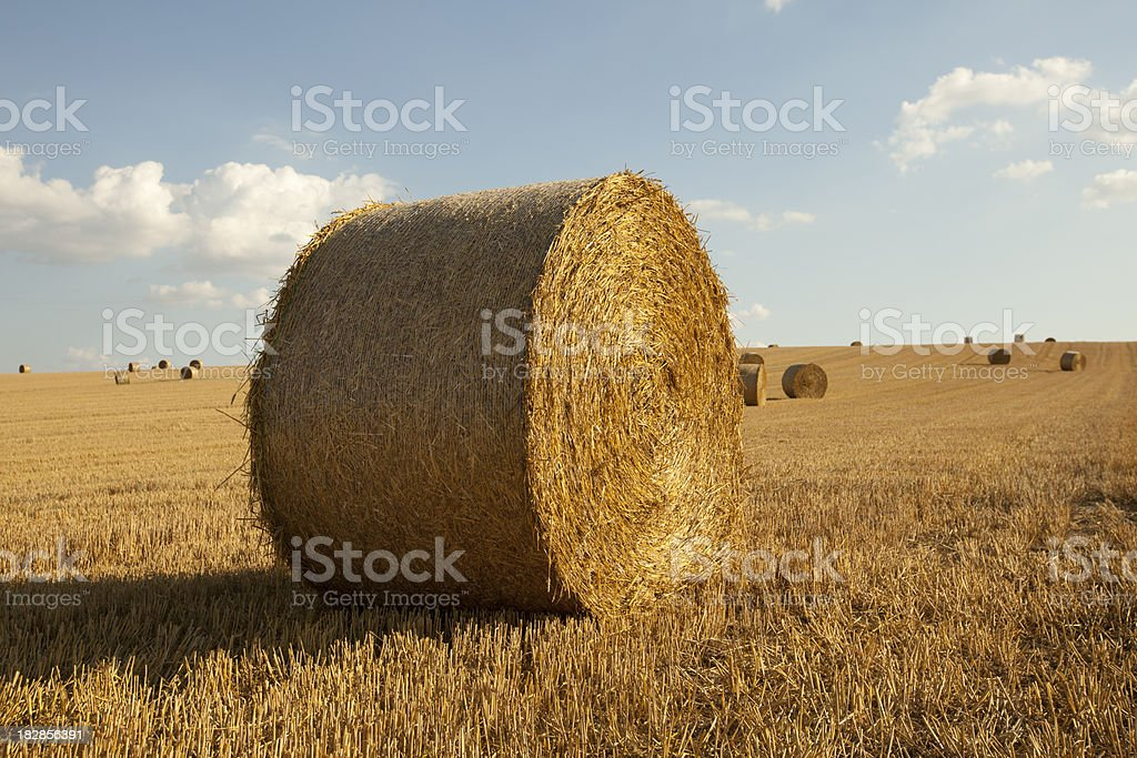 Hay bale in field royalty-free stock photo