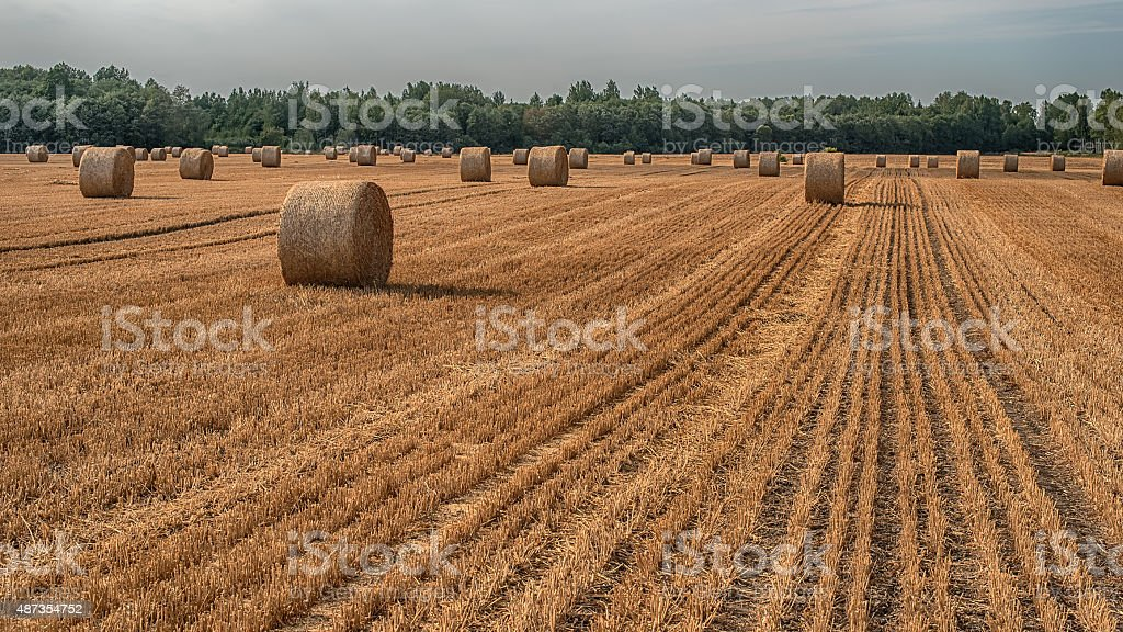 Hay bale in the field stock photo