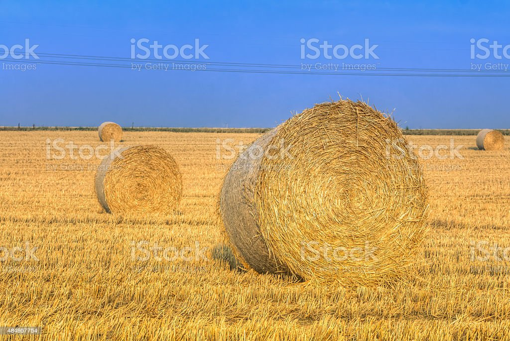 Hay bale in the harvest time stock photo
