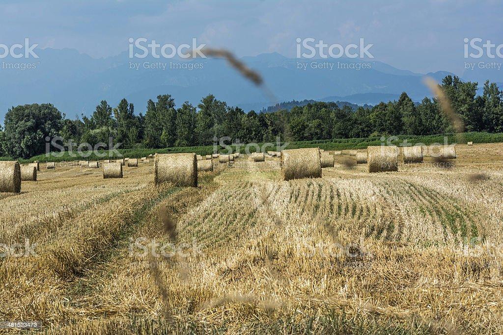 Hay Bale Landscape stock photo