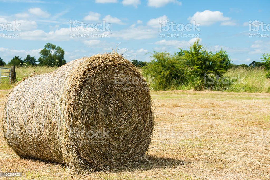 Hay Bale stock photo