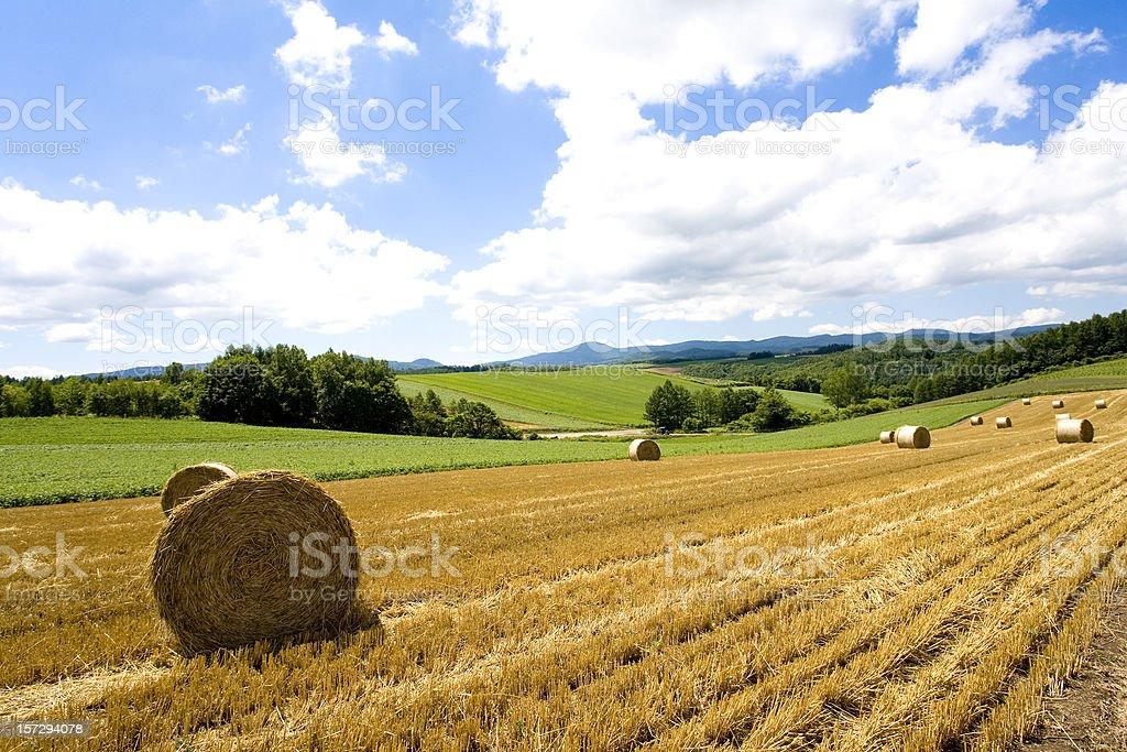 Hay Bale Scenery royalty-free stock photo