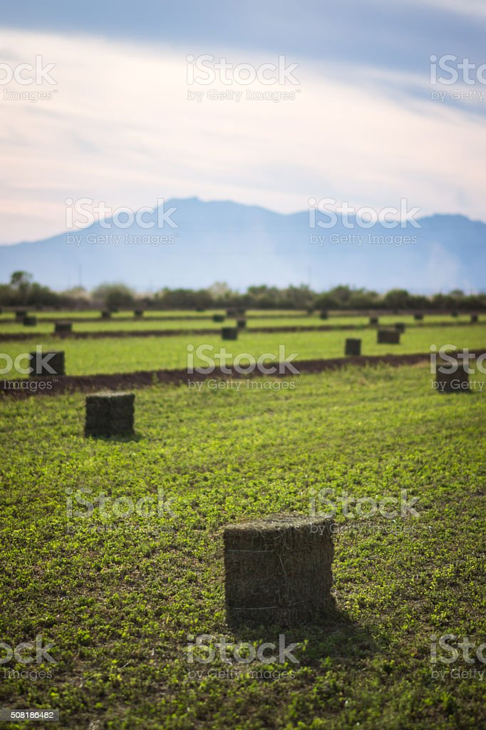 Hay Bales and Mountains stock photo