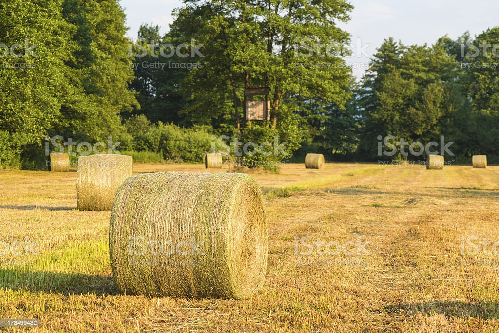 Hay bales and wildlife observation point stock photo
