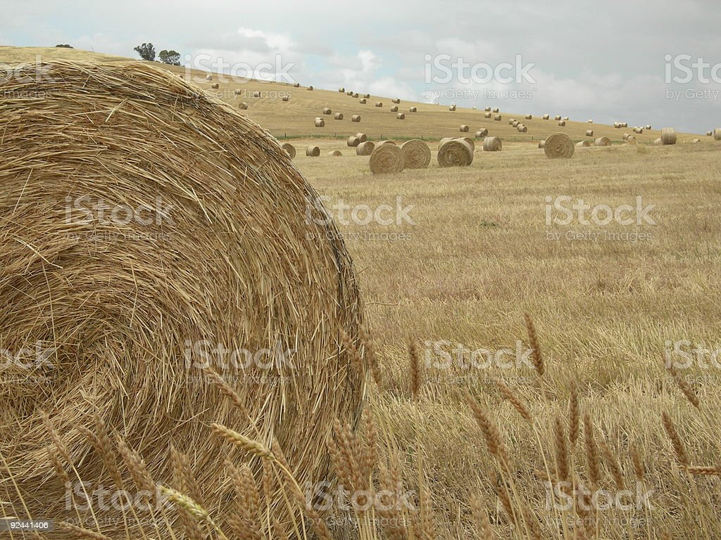 Hay bales depth royalty-free stock photo
