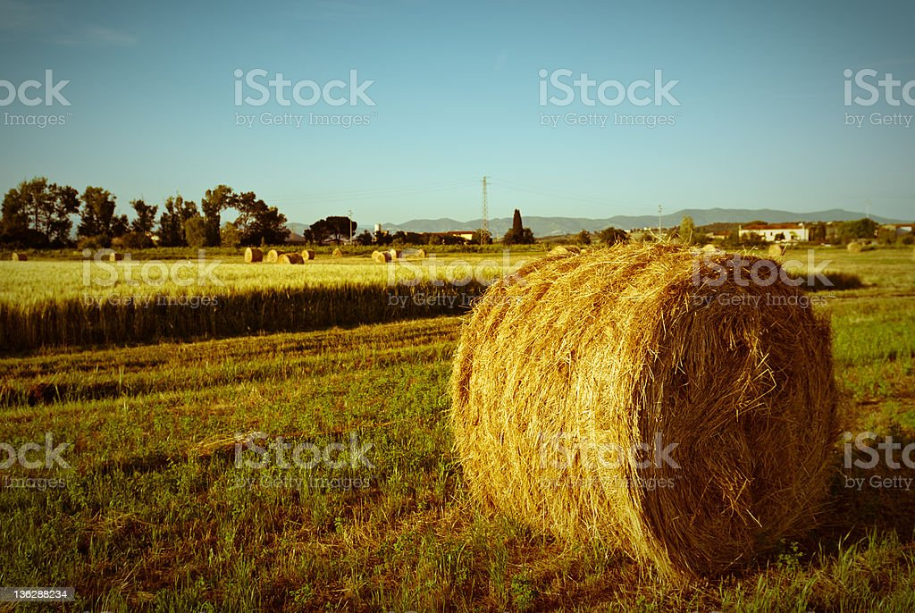 hay bales in a cultivated harvesting grain land stock photo