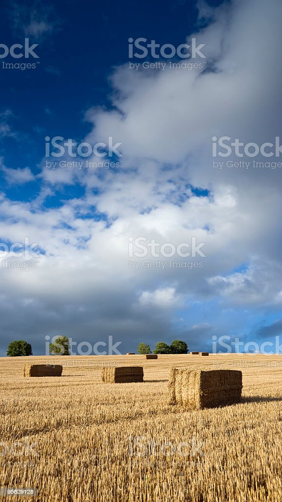 Hay bales in a field after harvest royalty-free stock photo