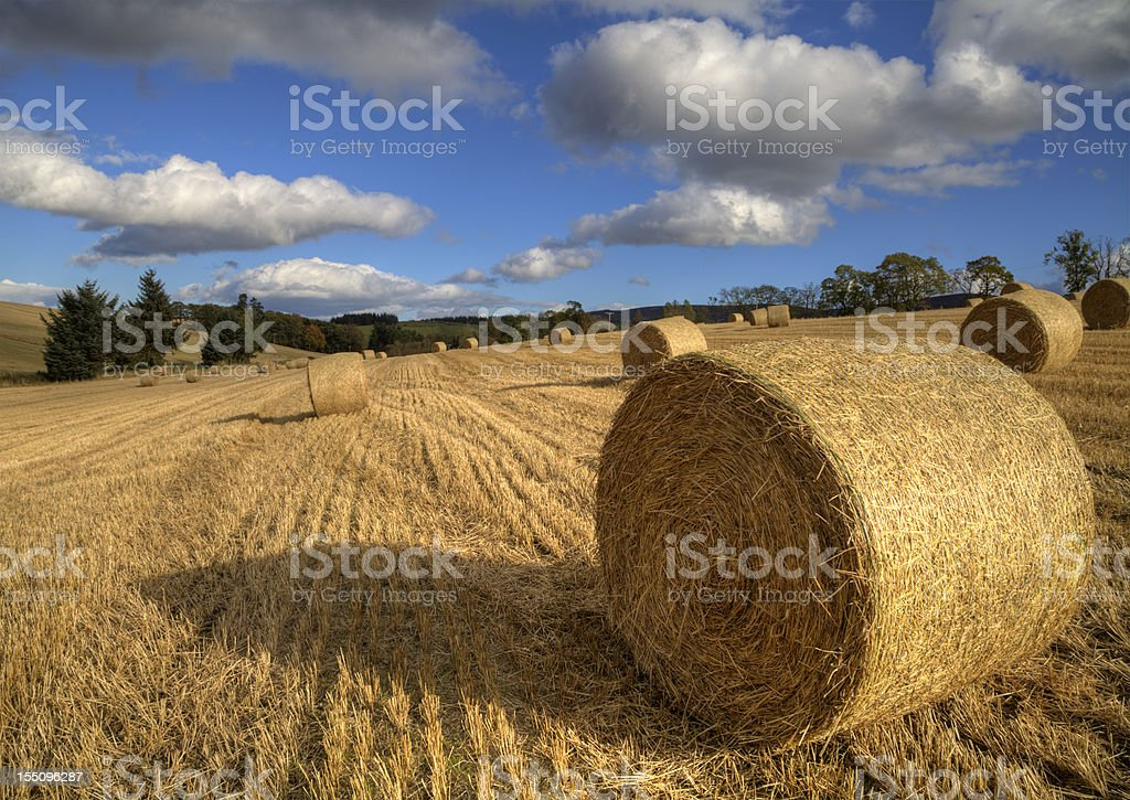 Hay Bales in a field stock photo