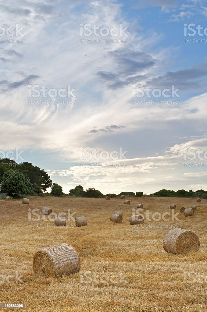 hay bales in a Mediterranean field royalty-free stock photo