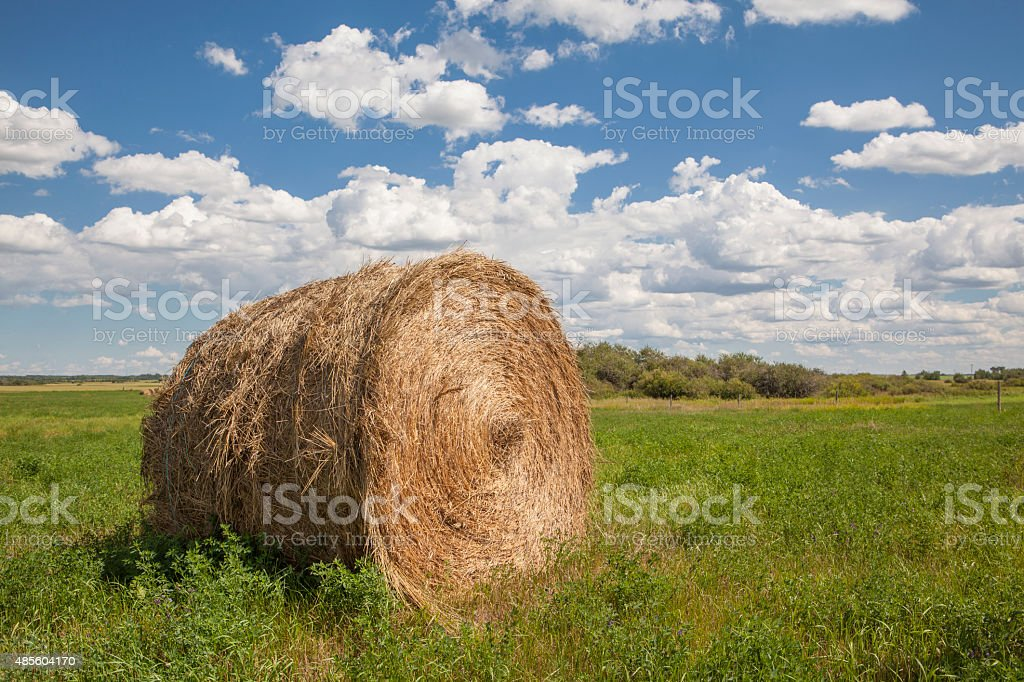Hay bales in a prairie field stock photo
