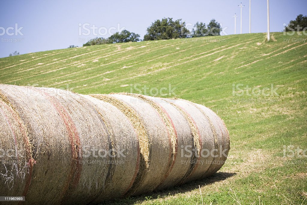 Hay bales in a row stock photo
