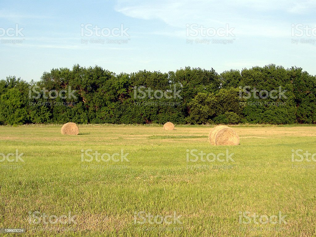 Hay Bales in Evening Sun 2 stock photo