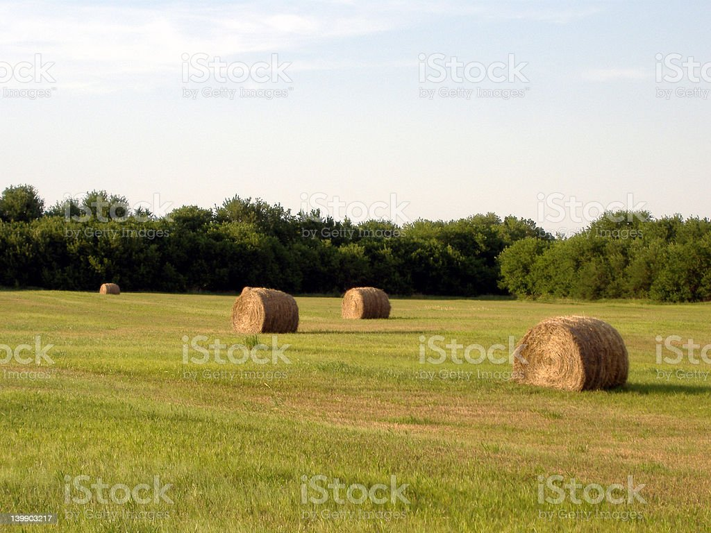 Hay Bales in Evening Sun stock photo