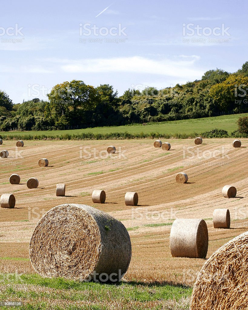 hay bales in field royalty-free stock photo