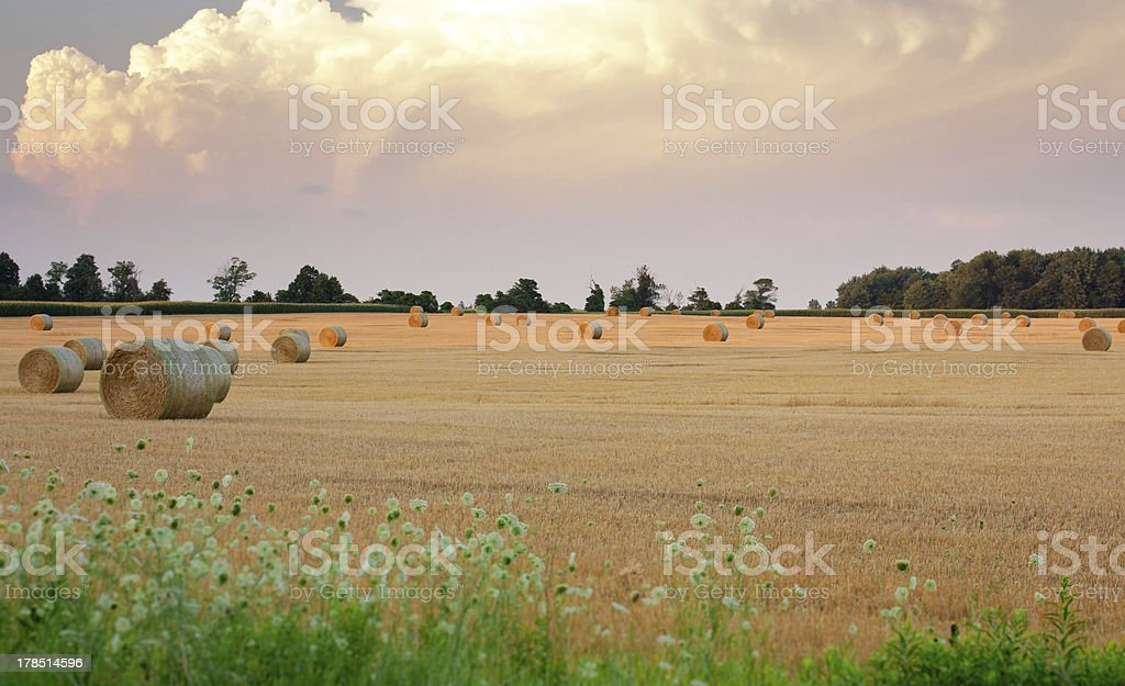 Hay bales in field wide expanse royalty-free stock photo