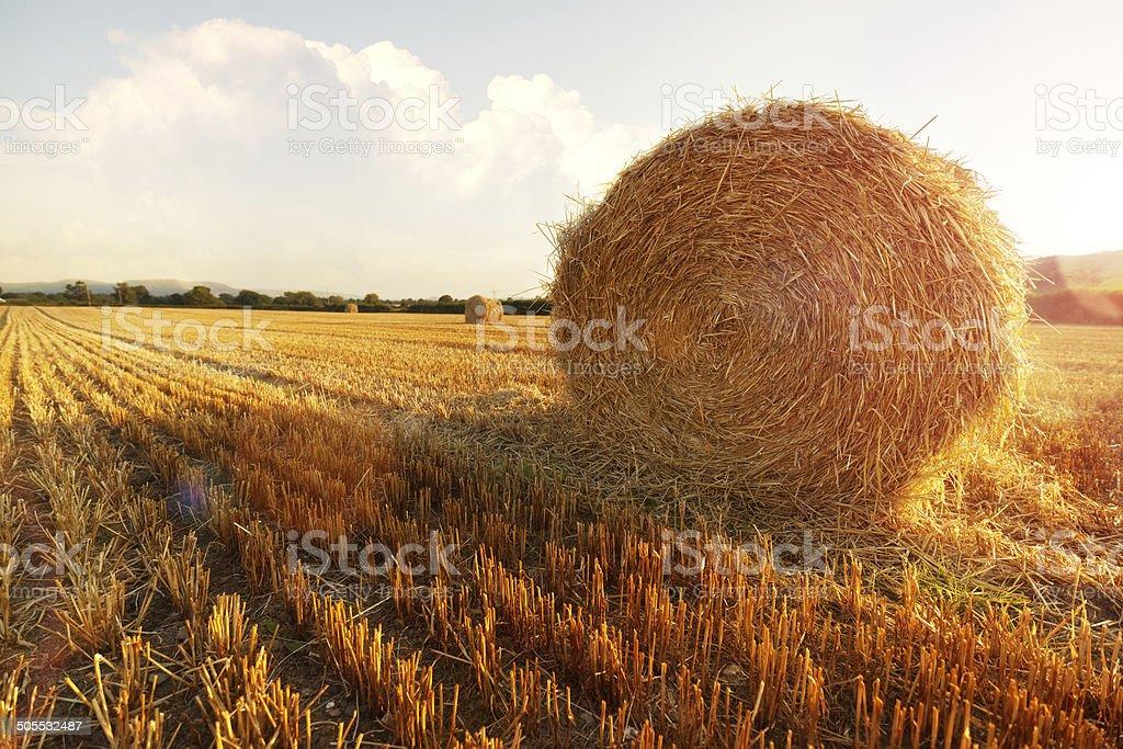 Hay bales in golden field stock photo