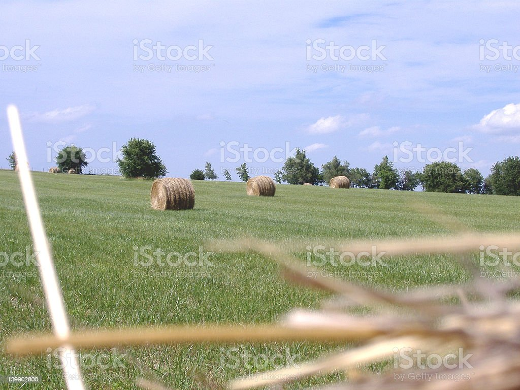 Hay Bales in Mid-Afternoon Sun 5 stock photo