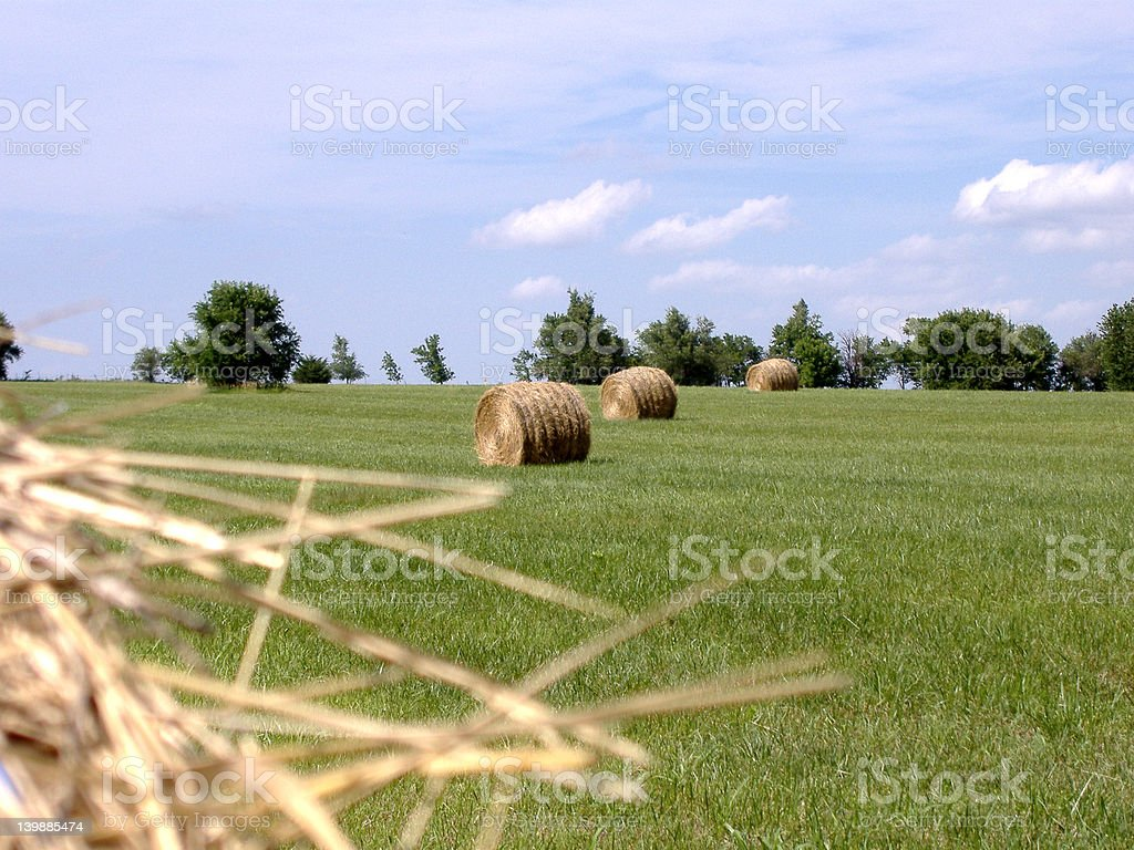 Hay Bales in Mid-Afternoon Sun 6 stock photo