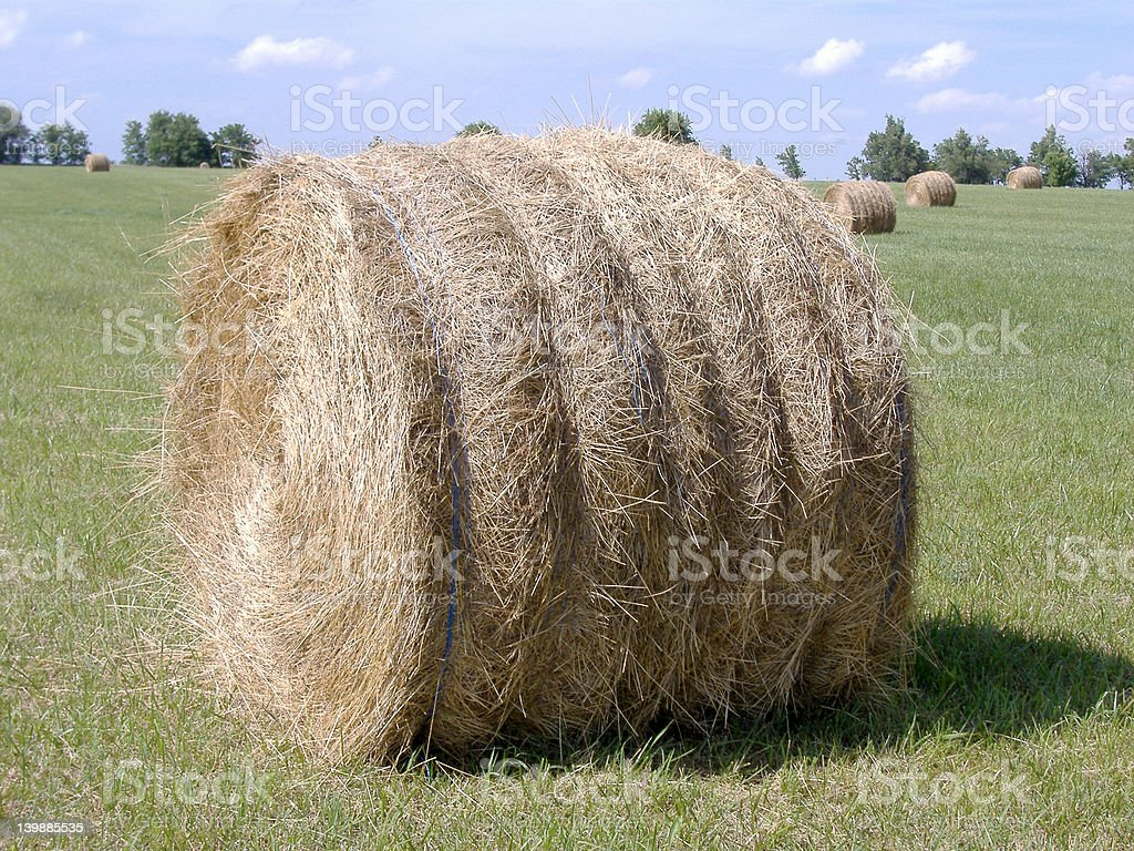 Hay Bales in Mid-Afternoon Sun 7 stock photo