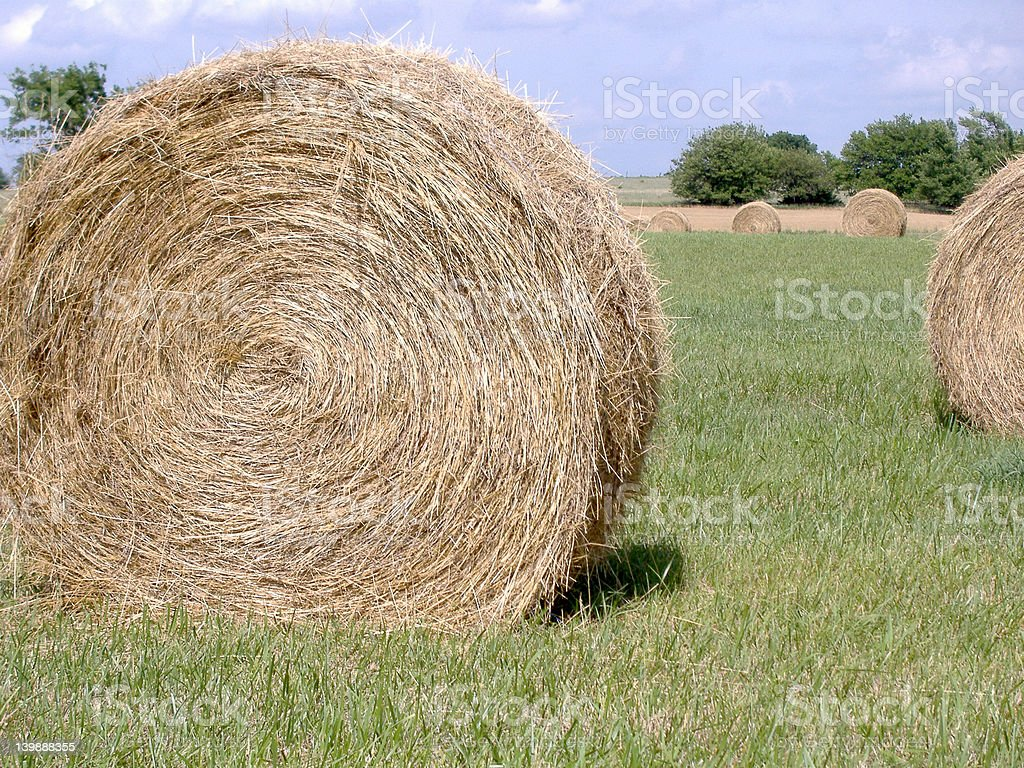 Hay Bales in Mid-Afternoon Sun 8 stock photo