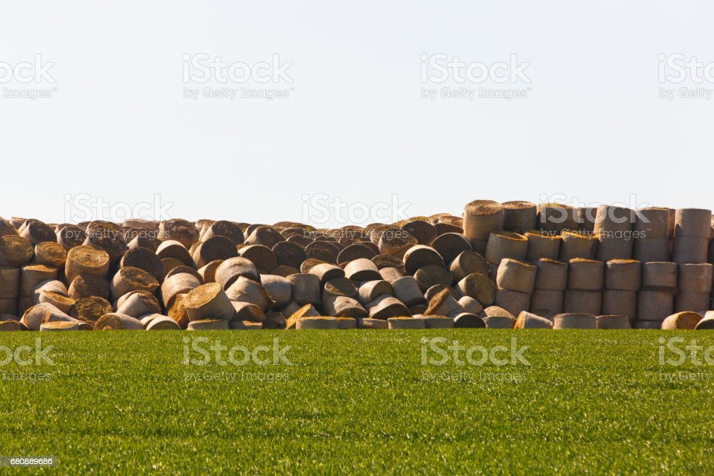 Hay bales in middle of the field stock photo