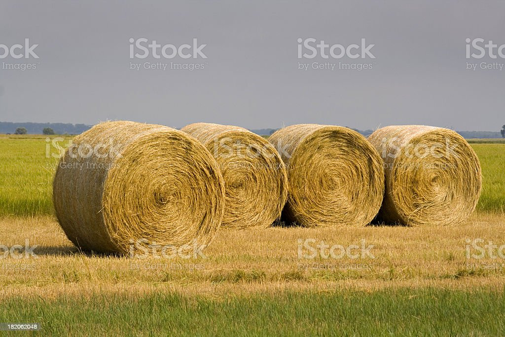 Hay Bales in Rows stock photo