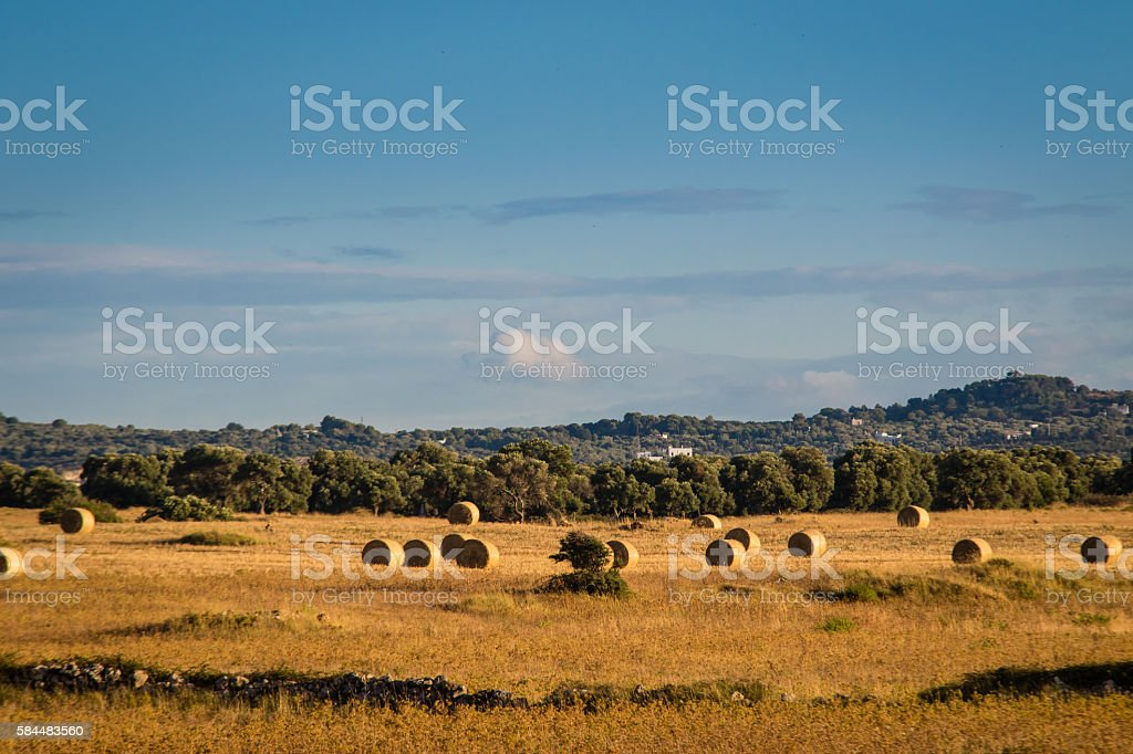Hay bales in the countryside near the Adriatic Sea stock photo