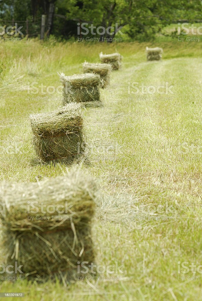 Hay Bales in the Field royalty-free stock photo