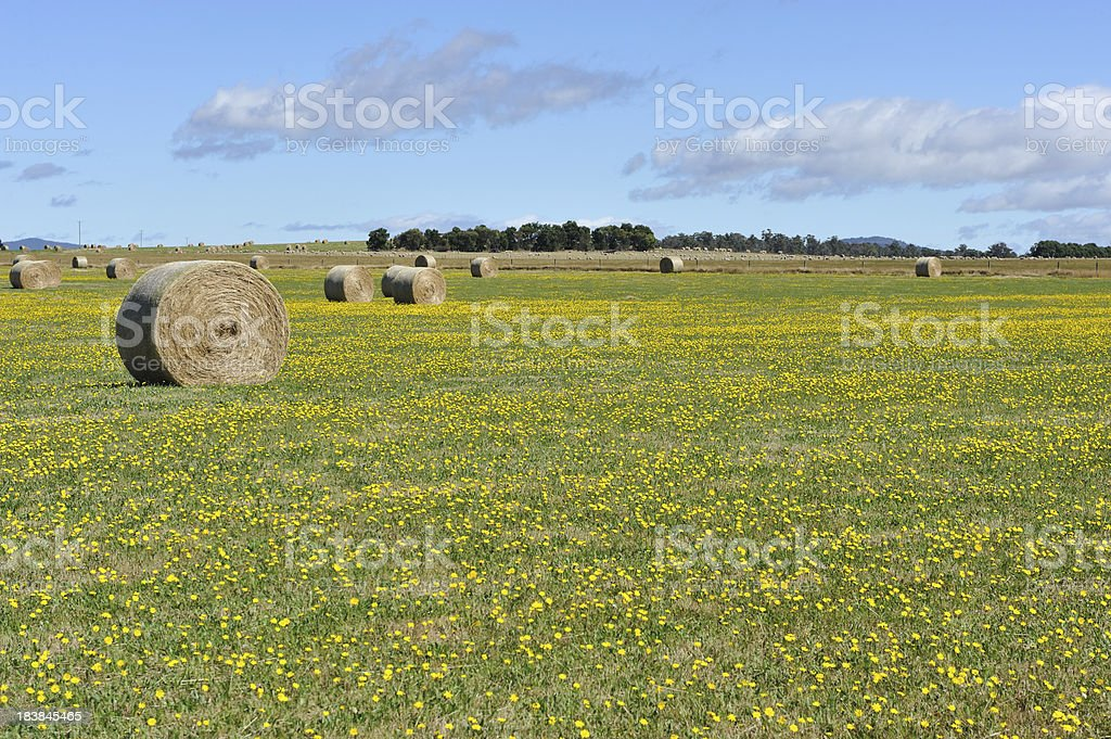 Hay bales in the meadow stock photo