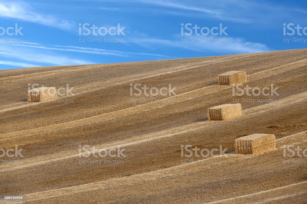 Hay Bales in the Palouse stock photo