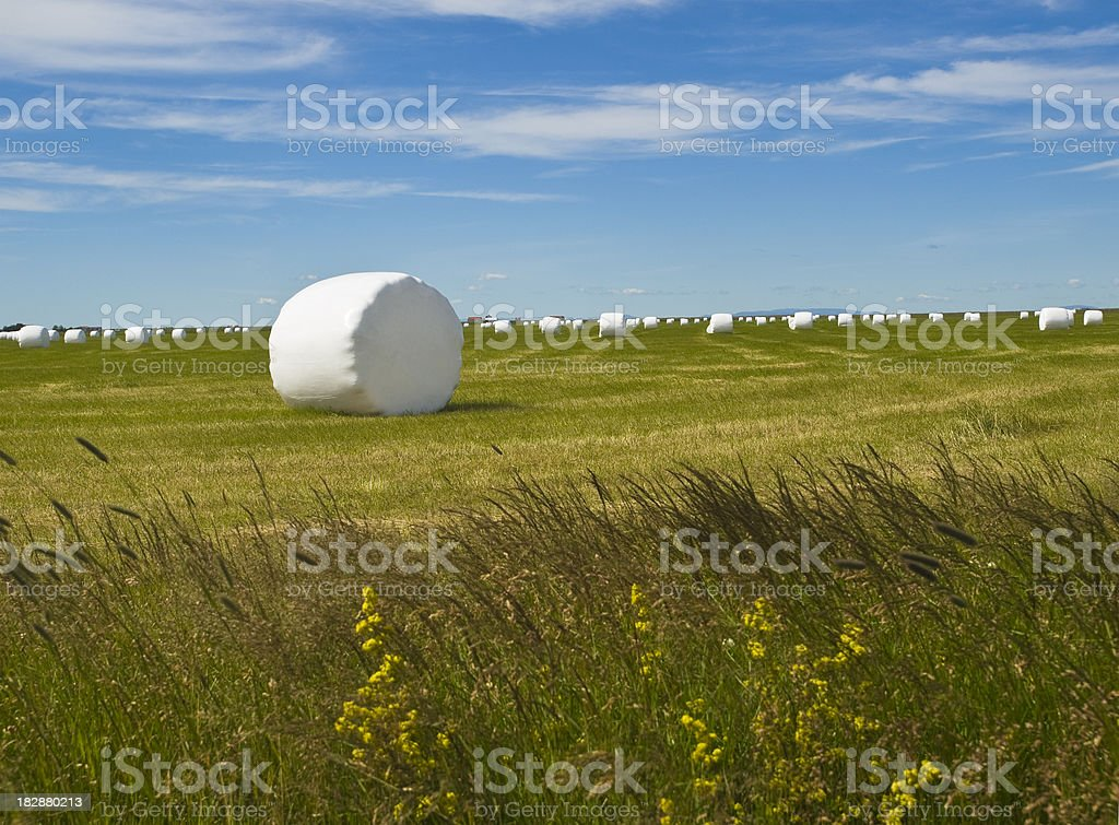 Hay bales in white plastic royalty-free stock photo