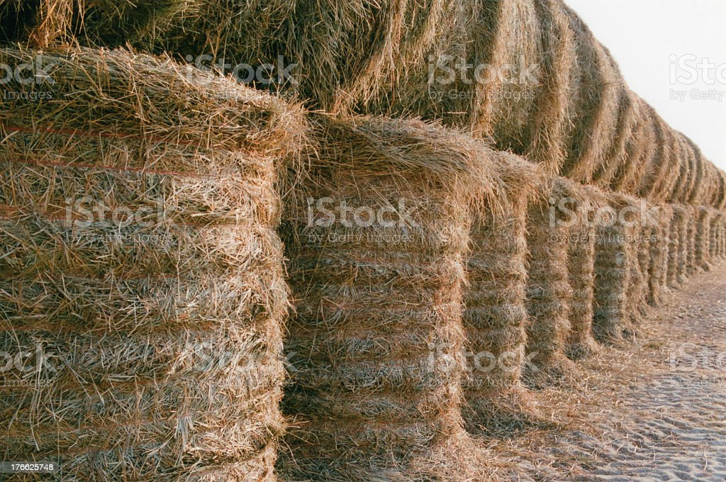 Hay bales lined up royalty-free stock photo