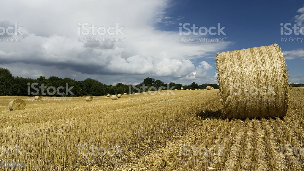 Hay bales on a summer day stock photo