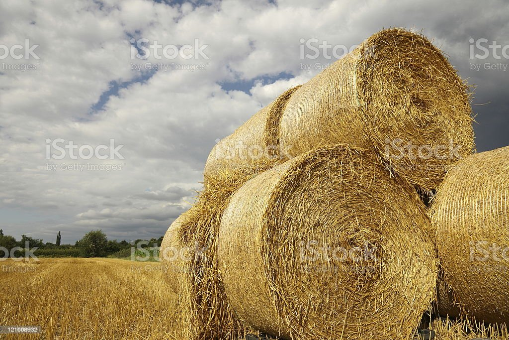 hay bales on stubble field royalty-free stock photo