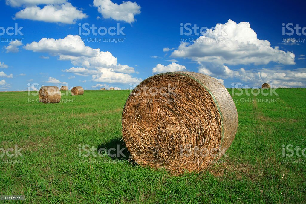 Hay Bales on Summer Meadow royalty-free stock photo