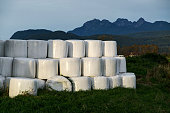 Hay bales packed in white plastic in Pitt Meadows,  Canada