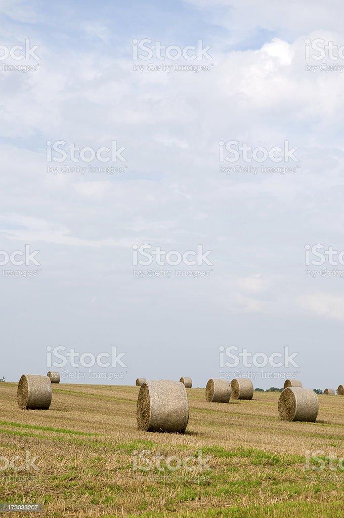 Hay bales. stock photo
