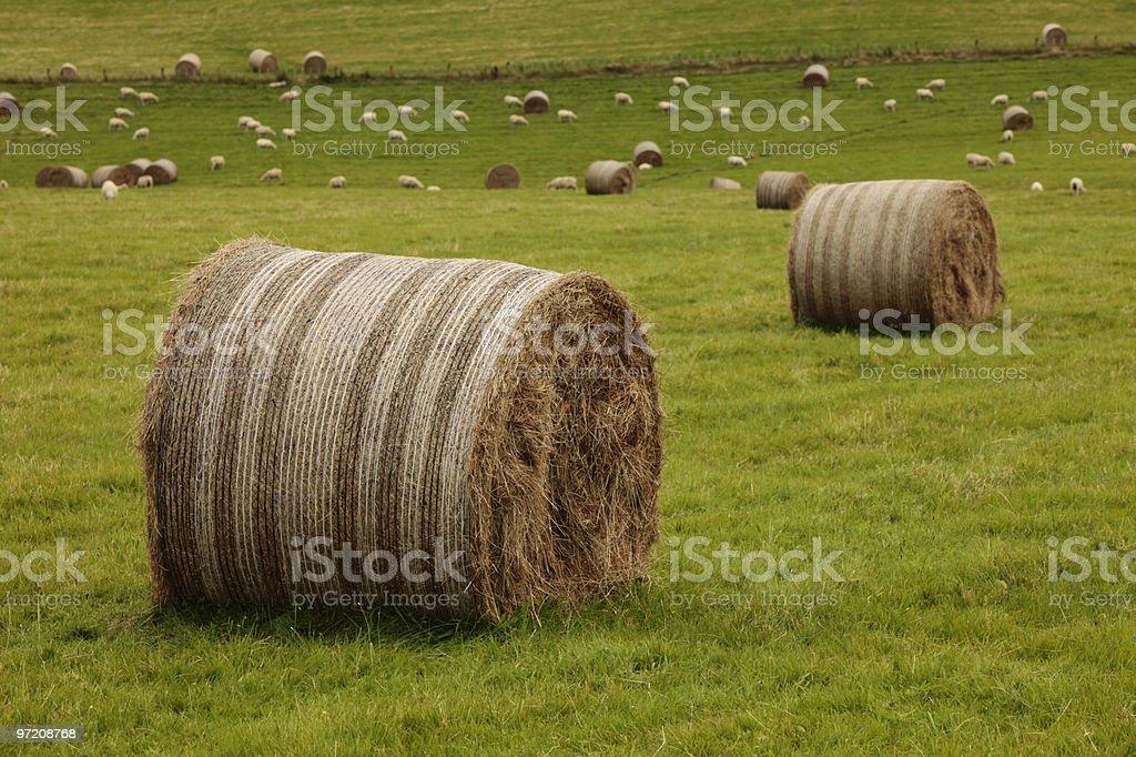 Hay Bales stock photo