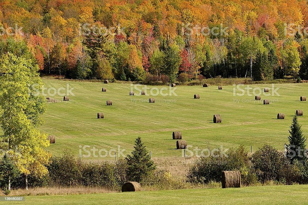 Hay Bales with Autumn Backdrop stock photo