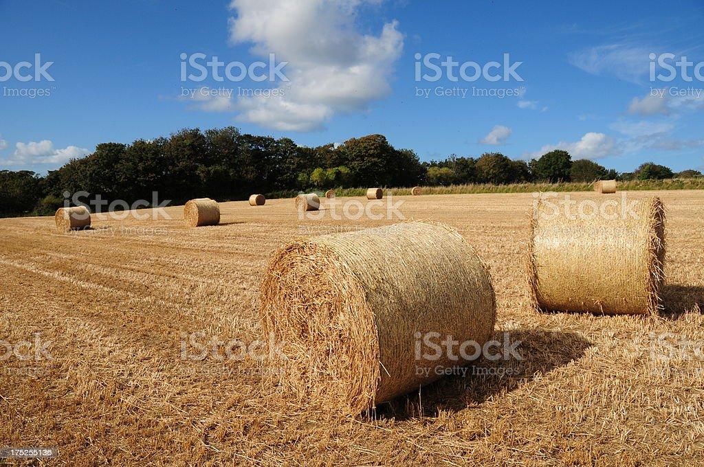 Hay bales,Jersey. royalty-free stock photo