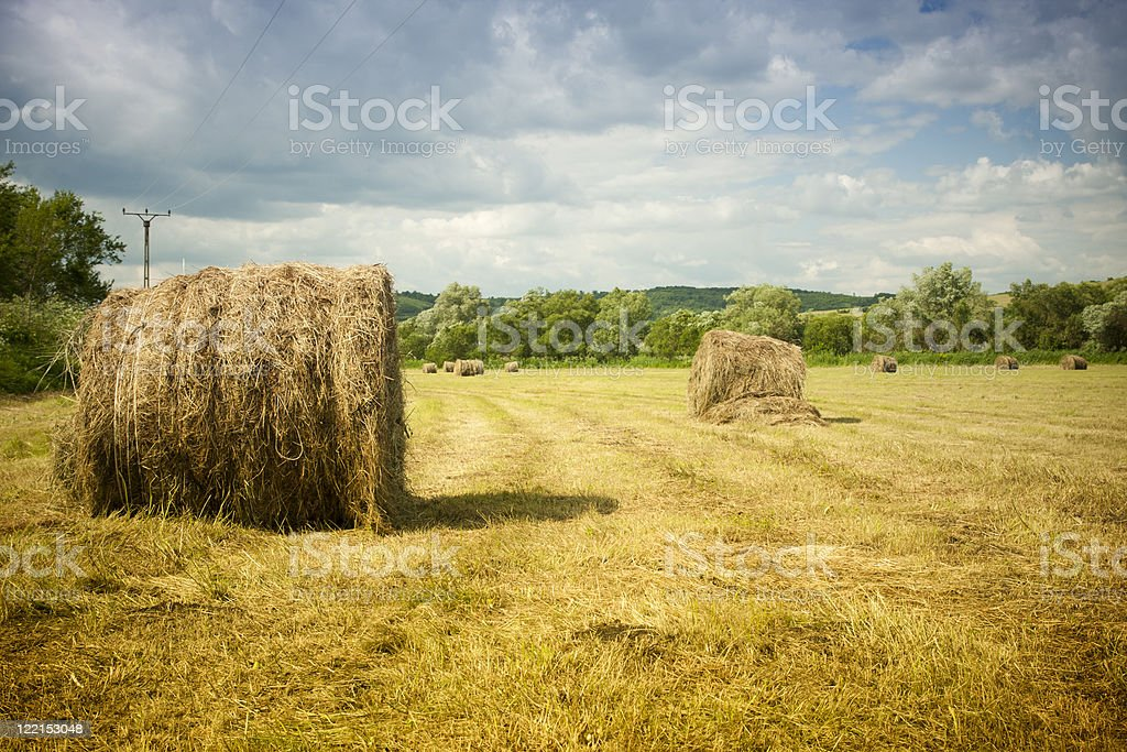 Hay ballot  After Harvesting stock photo