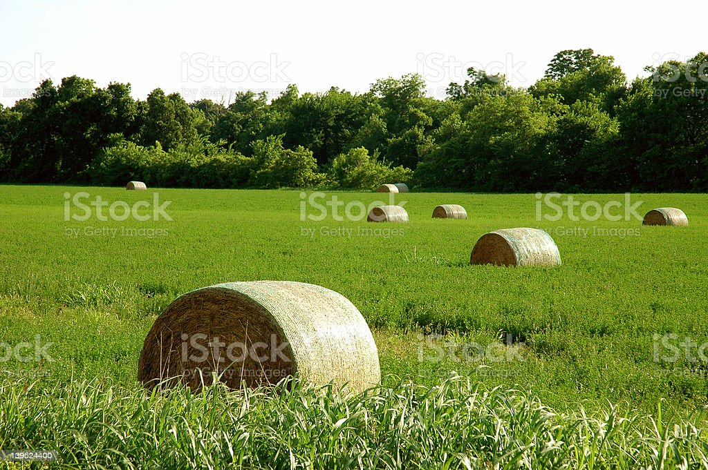 Hay Bundles royalty-free stock photo