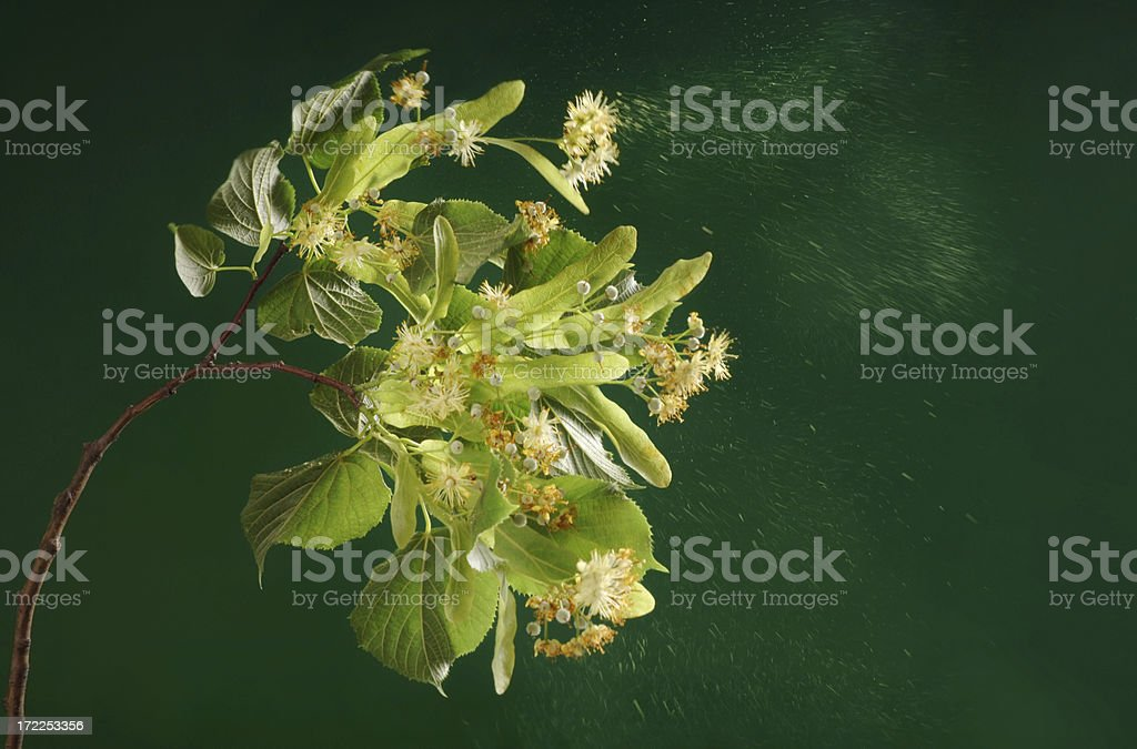 Hay Fever Season stock photo