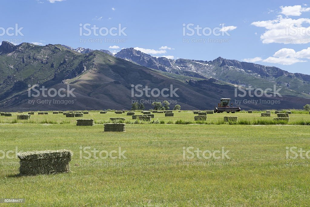 Hay Field and Combine Tractor royalty-free stock photo