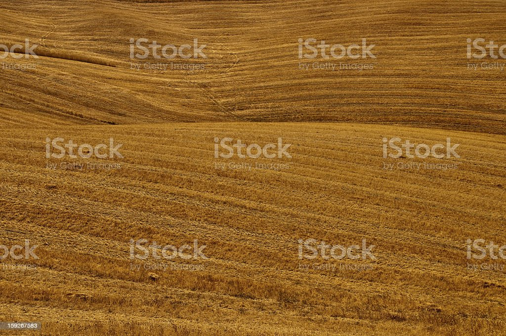 Hay field background royalty-free stock photo