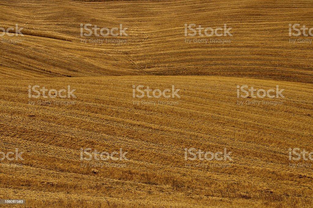 Hay field background stock photo