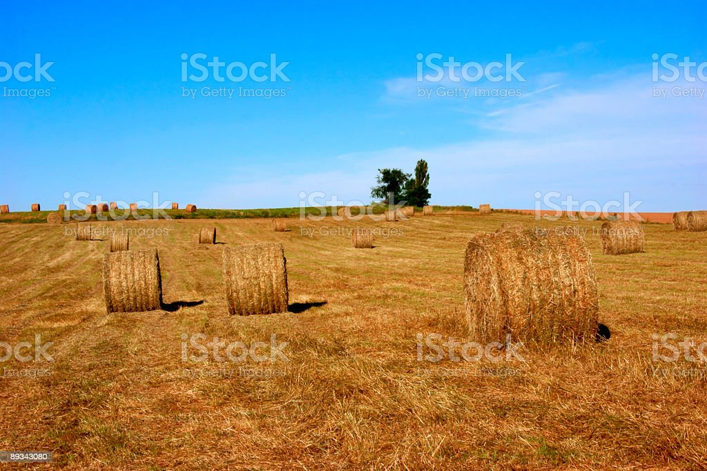 Hay Field with Large Bales 3 royalty-free stock photo